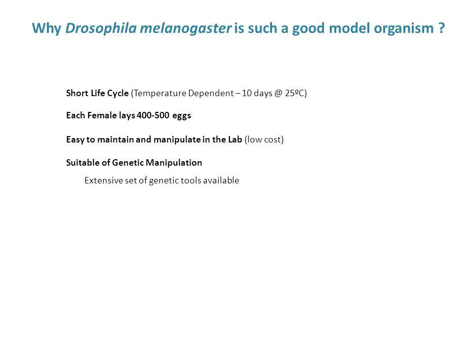 Why Drosophila melanogaster is such a good model organism .