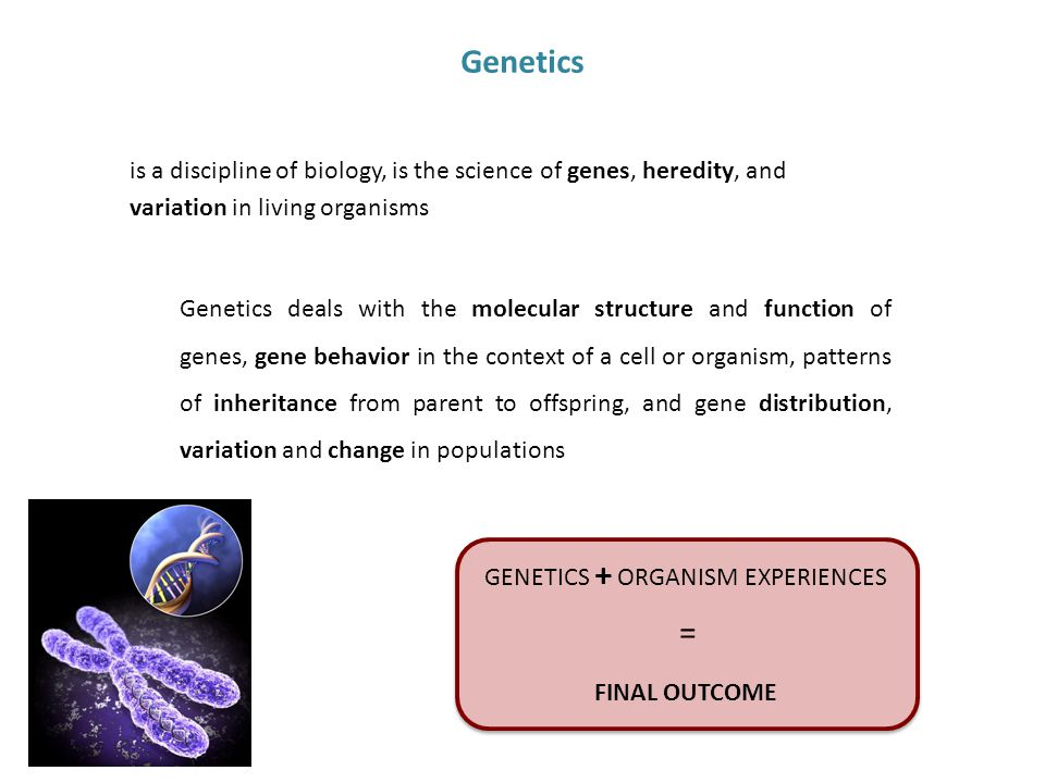 Genetics Genetics deals with the molecular structure and function of genes, gene behavior in the context of a cell or organism, patterns of inheritance from parent to offspring, and gene distribution, variation and change in populations is a discipline of biology, is the science of genes, heredity, and variation in living organisms GENETICS + ORGANISM EXPERIENCES = FINAL OUTCOME