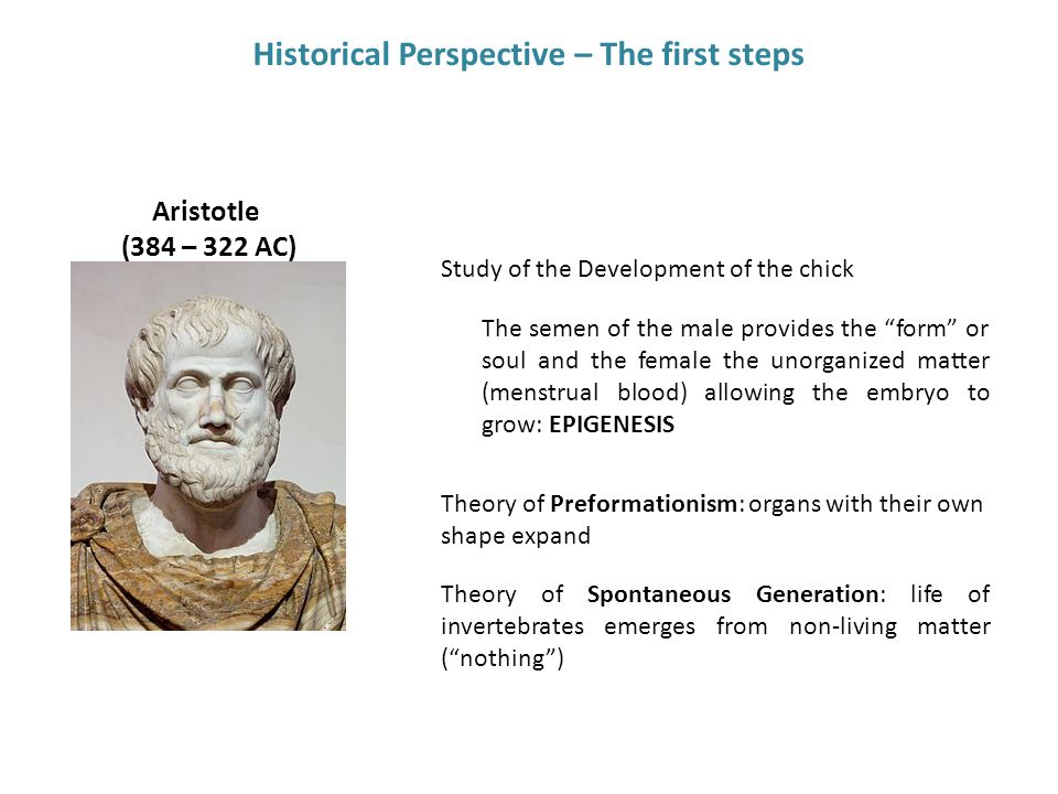 "Historical Perspective – The first steps Aristotle (384 – 322 AC) Study of the Development of the chick The semen of the male provides the ""form"" or s"