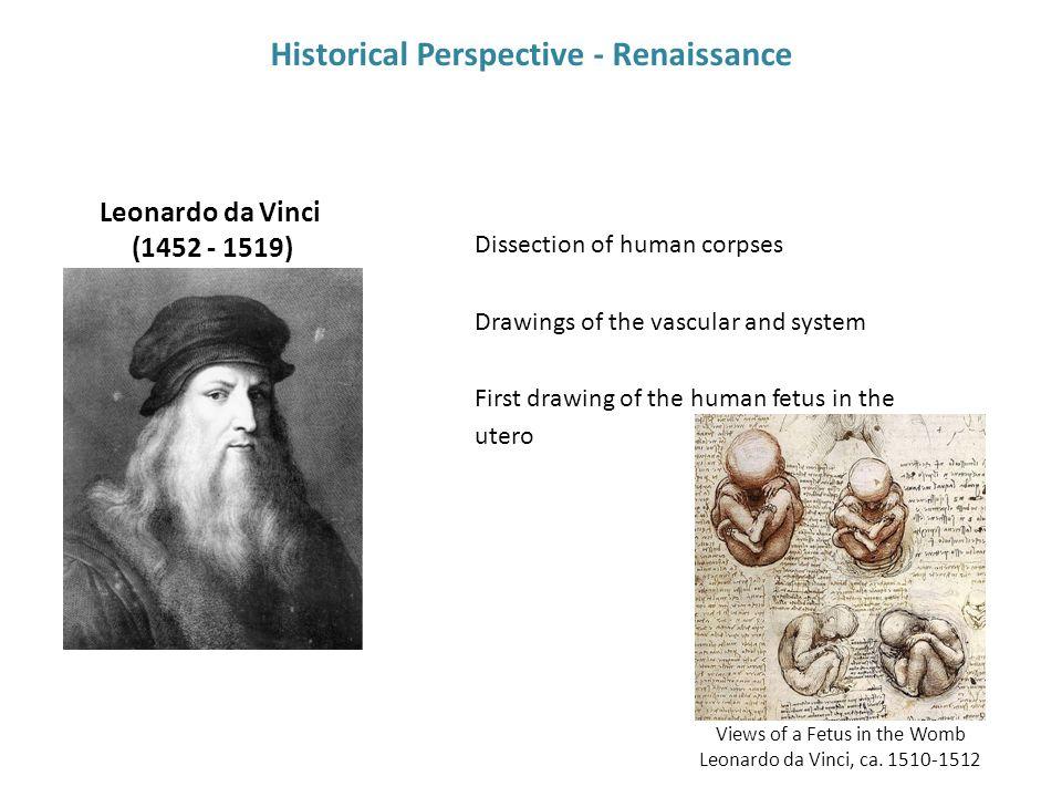 Views of a Fetus in the Womb Leonardo da Vinci, ca.