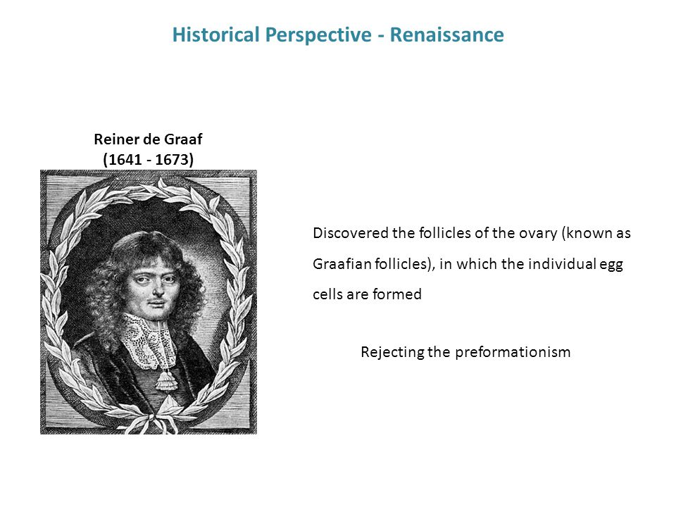 Historical Perspective - Renaissance Discovered the follicles of the ovary (known as Graafian follicles), in which the individual egg cells are formed Reiner de Graaf (1641 - 1673) Rejecting the preformationism