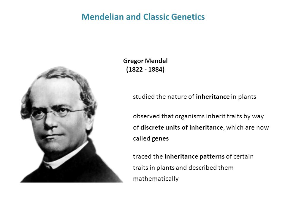Mendelian and Classic Genetics Gregor Mendel (1822 - 1884) observed that organisms inherit traits by way of discrete units of inheritance, which are now called genes studied the nature of inheritance in plants traced the inheritance patterns of certain traits in plants and described them mathematically