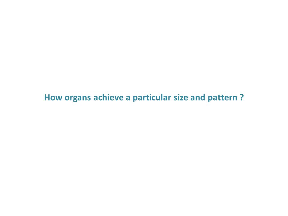 How organs achieve a particular size and pattern ?