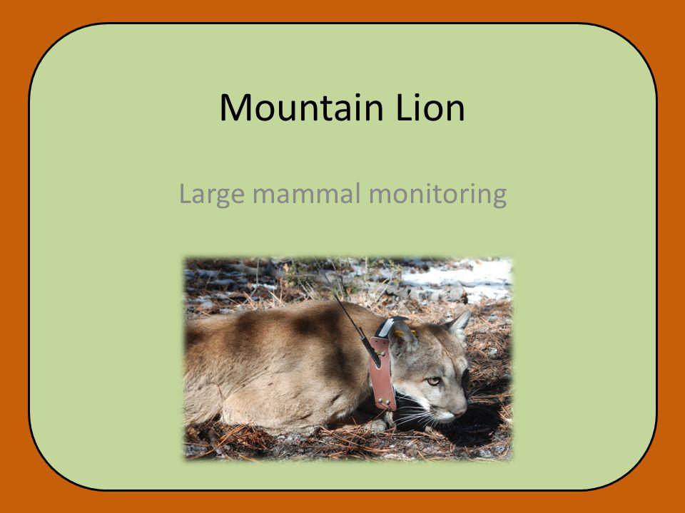 Mountain Lion Large mammal monitoring