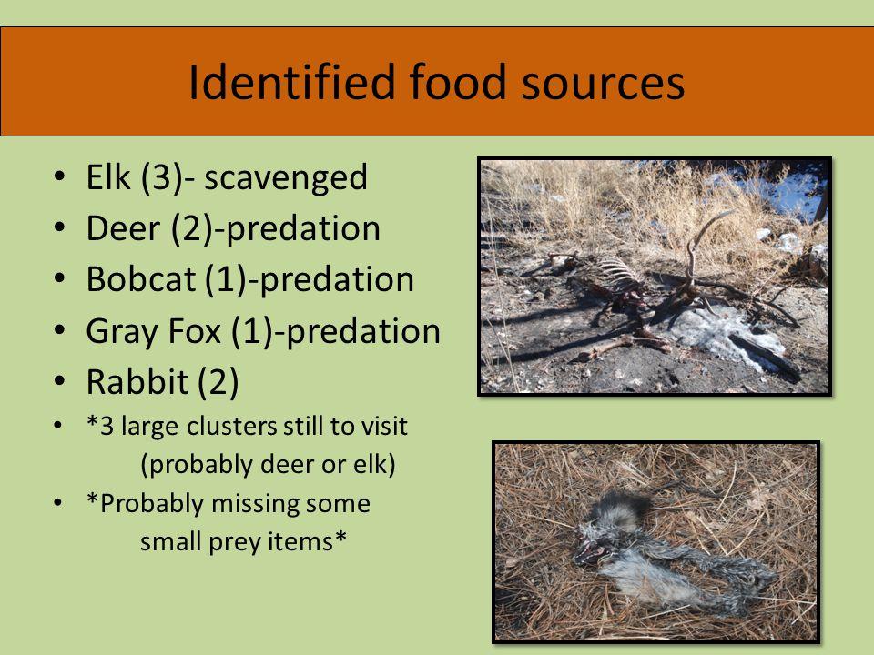 Identified food sources Elk (3)- scavenged Deer (2)-predation Bobcat (1)-predation Gray Fox (1)-predation Rabbit (2) *3 large clusters still to visit