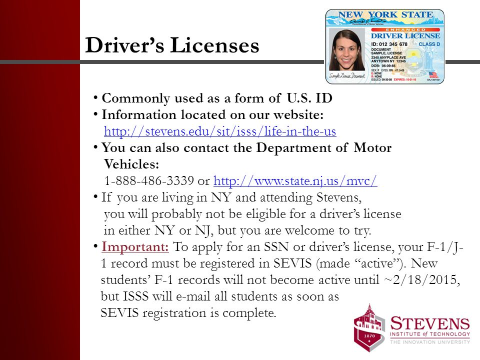 Driver's Licenses Commonly used as a form of U.S.