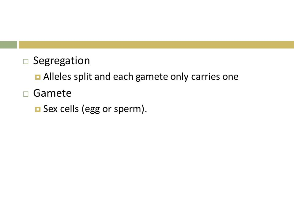  Segregation  Alleles split and each gamete only carries one  Gamete  Sex cells (egg or sperm).