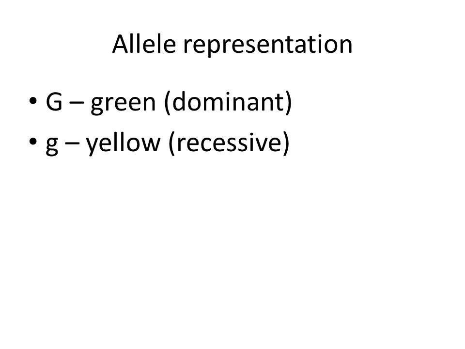 Allele representation G – green (dominant) g – yellow (recessive)