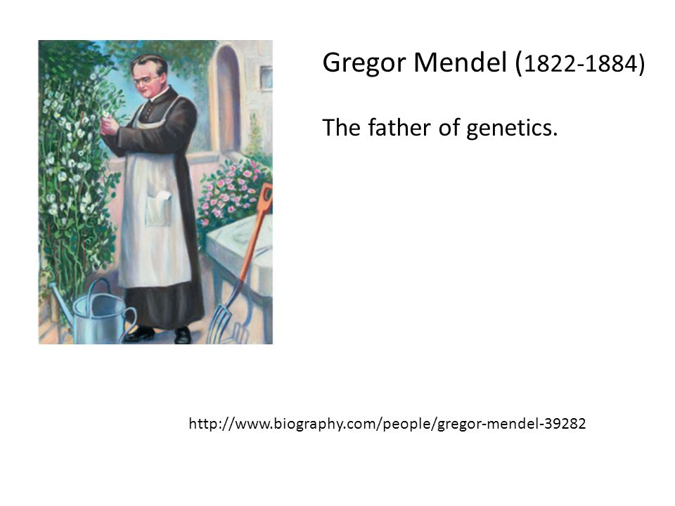 Gregor Mendel ( 1822-1884) The father of genetics. http://www.biography.com/people/gregor-mendel-39282
