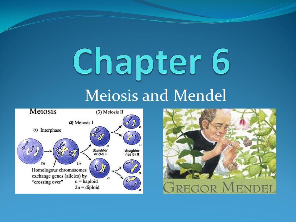 Section 6.1- Chromosomes You have many different types of cells in your body, but there are only 2 general types.
