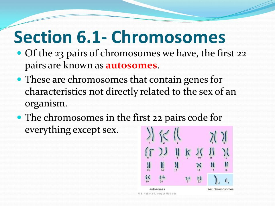 Section 6.1- Chromosomes The 23 rd pair of chromosomes are called your sex chromosomes.