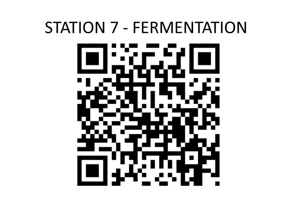 STATION 7 - FERMENTATION