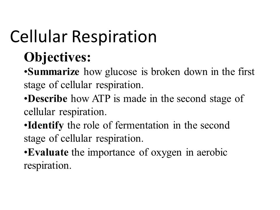 Cellular Respiration Objectives: Summarize how glucose is broken down in the first stage of cellular respiration.