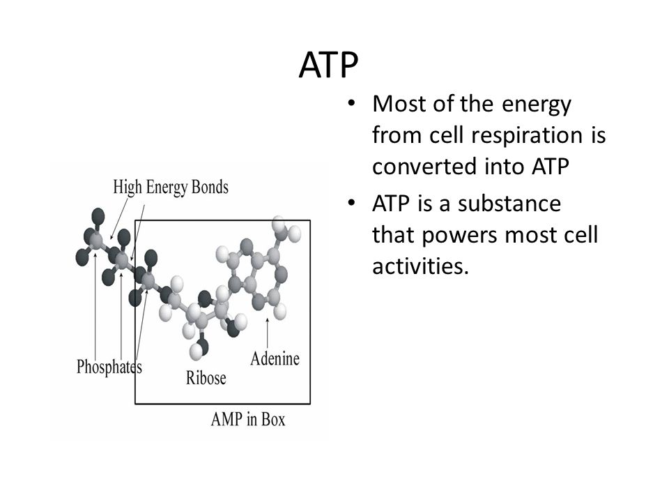 ATP Most of the energy from cell respiration is converted into ATP ATP is a substance that powers most cell activities.