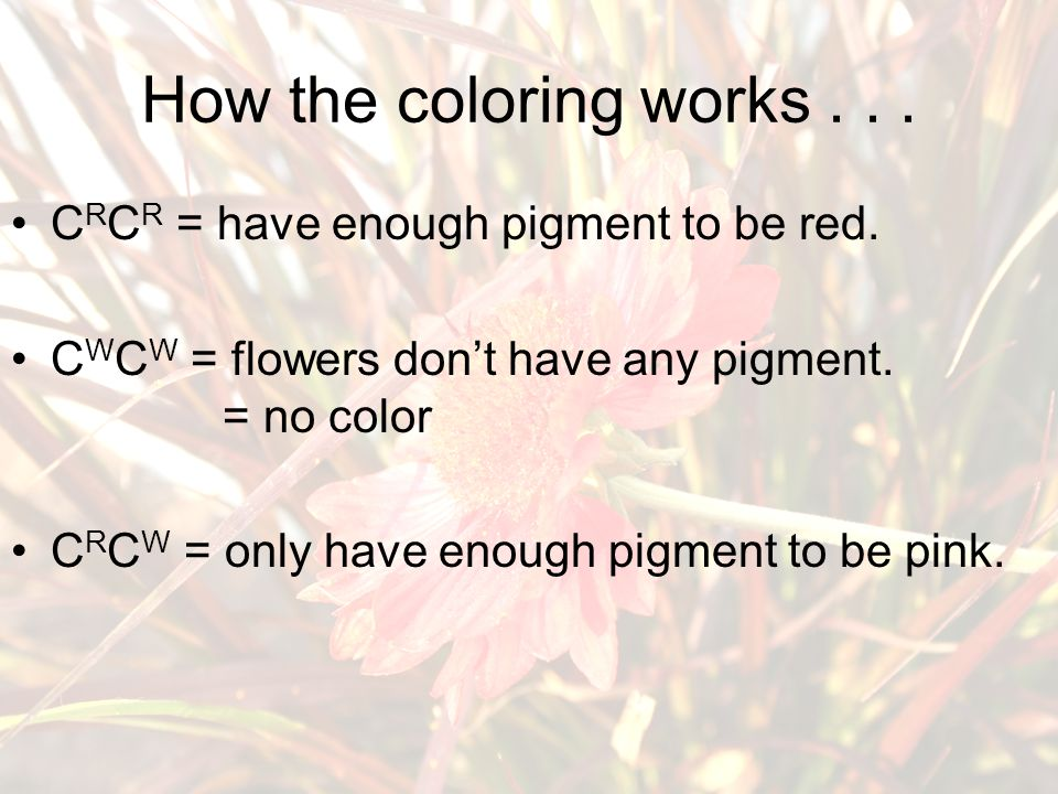 How the coloring works... C R C R = have enough pigment to be red.
