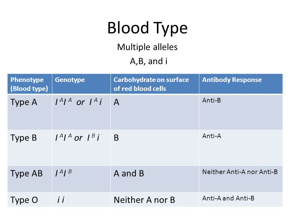 Blood Type Multiple alleles A,B, and i Phenotype (Blood type) GenotypeCarbohydrate on surface of red blood cells Antibody Response Type AI A I A or I A iA Anti-B Type BI A I A or I B iB Anti-A Type ABI AI BI AI B A and B Neither Anti-A nor Anti-B Type O i iNeither A nor B Anti-A and Anti-B