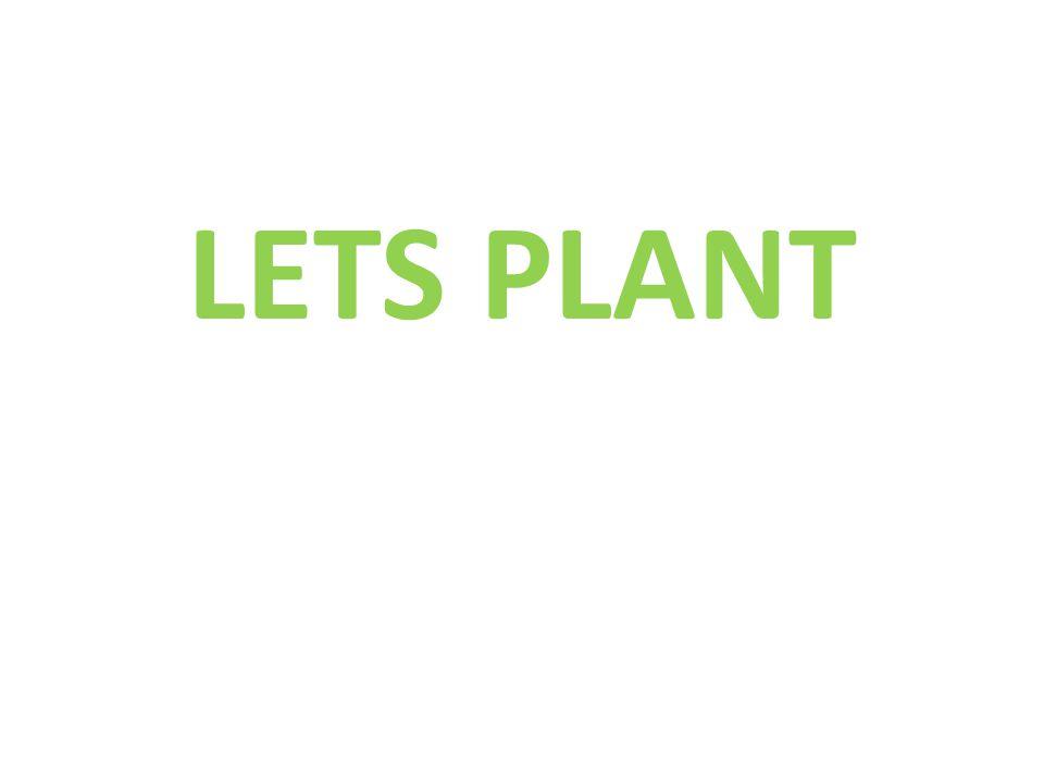 LETS PLANT