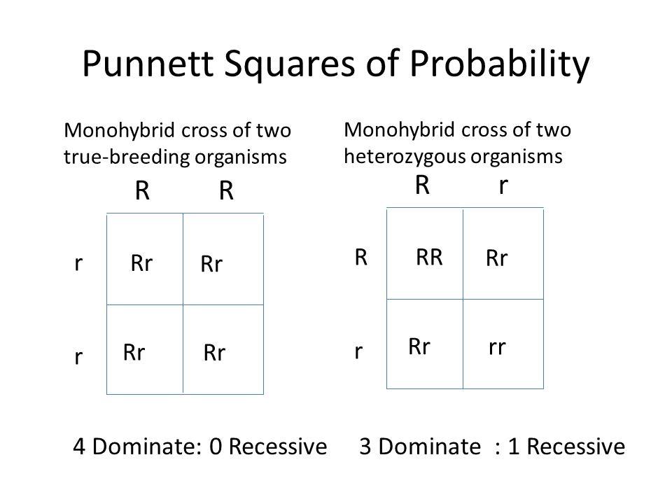Punnett Squares of Probability R R rrrr Rr RrRr rr Rr RR Monohybrid cross of two true-breeding organisms Monohybrid cross of two heterozygous organism