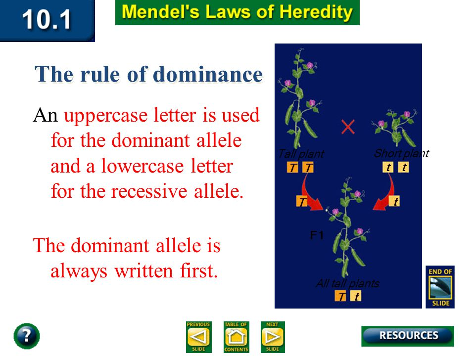 Section 10.1 Summary – pages 253-262 The rule of dominance An uppercase letter is used for the dominant allele and a lowercase letter for the recessive allele.