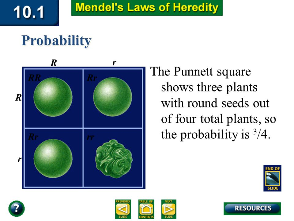 Section 10.1 Summary – pages 253-262 The Punnett square shows three plants with round seeds out of four total plants, so the probability is 3 /4. Prob
