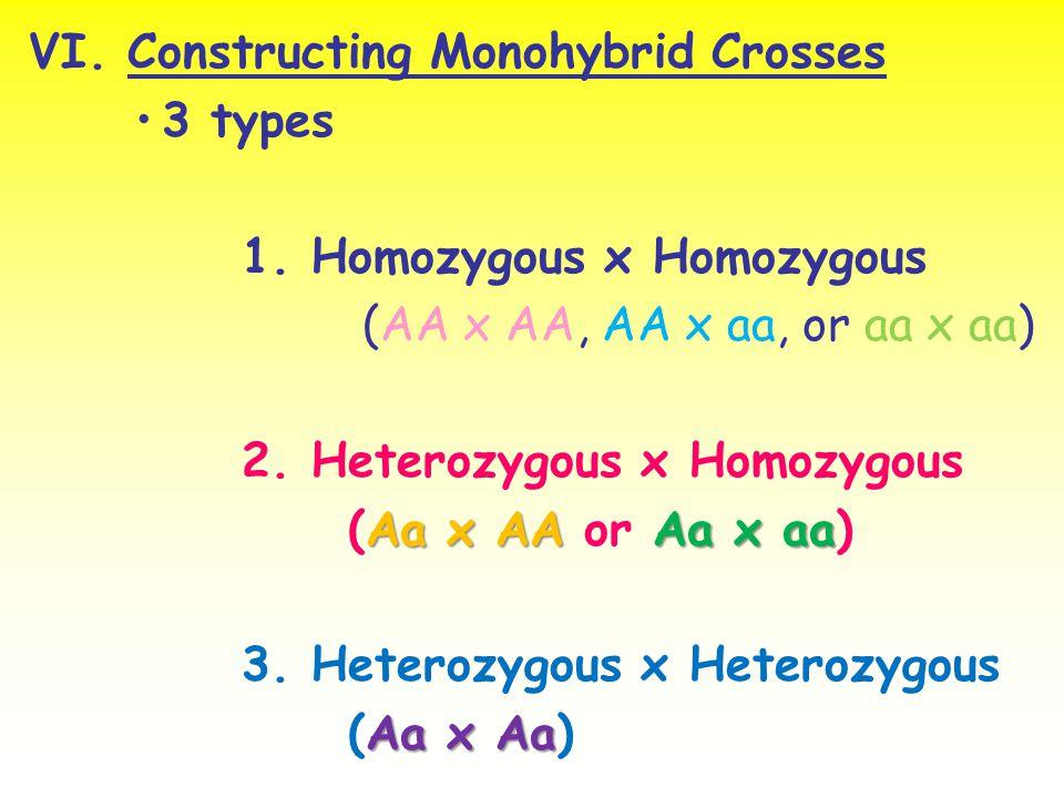 VI. Constructing Monohybrid Crosses 3 types 1. Homozygous x Homozygous (AA x AA, AA x aa, or aa x aa) 2. Heterozygous x Homozygous Aa x AA Aa x aa (Aa
