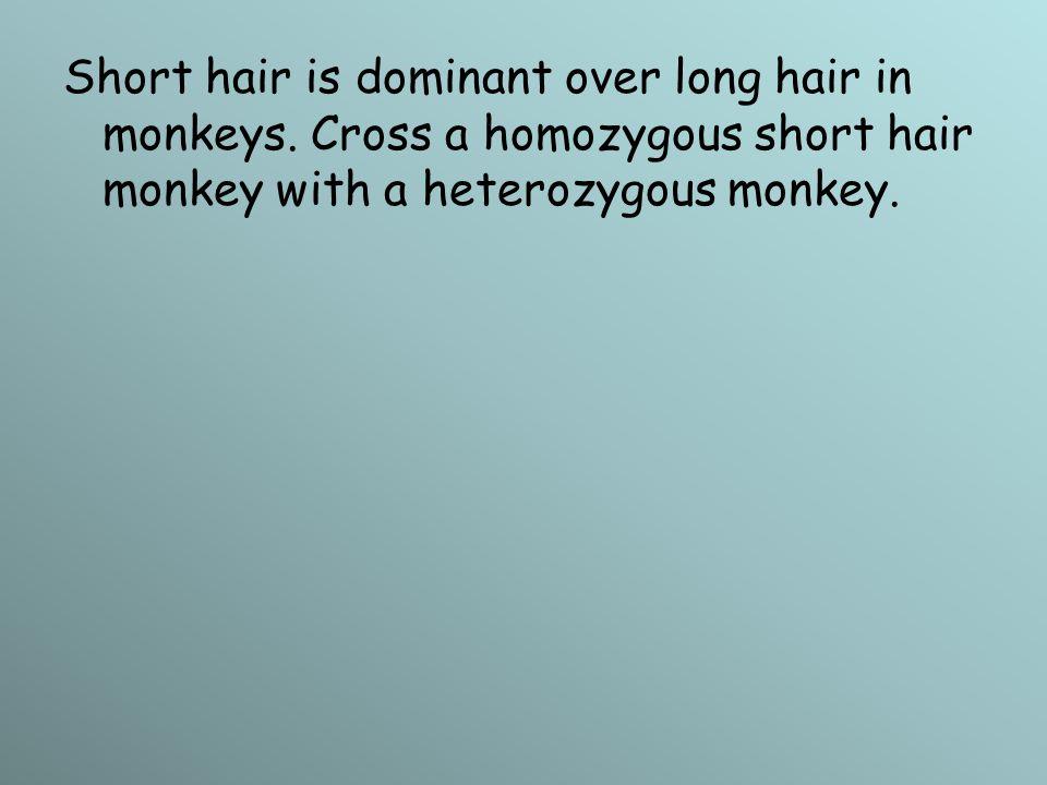 Short hair is dominant over long hair in monkeys. Cross a homozygous short hair monkey with a heterozygous monkey.