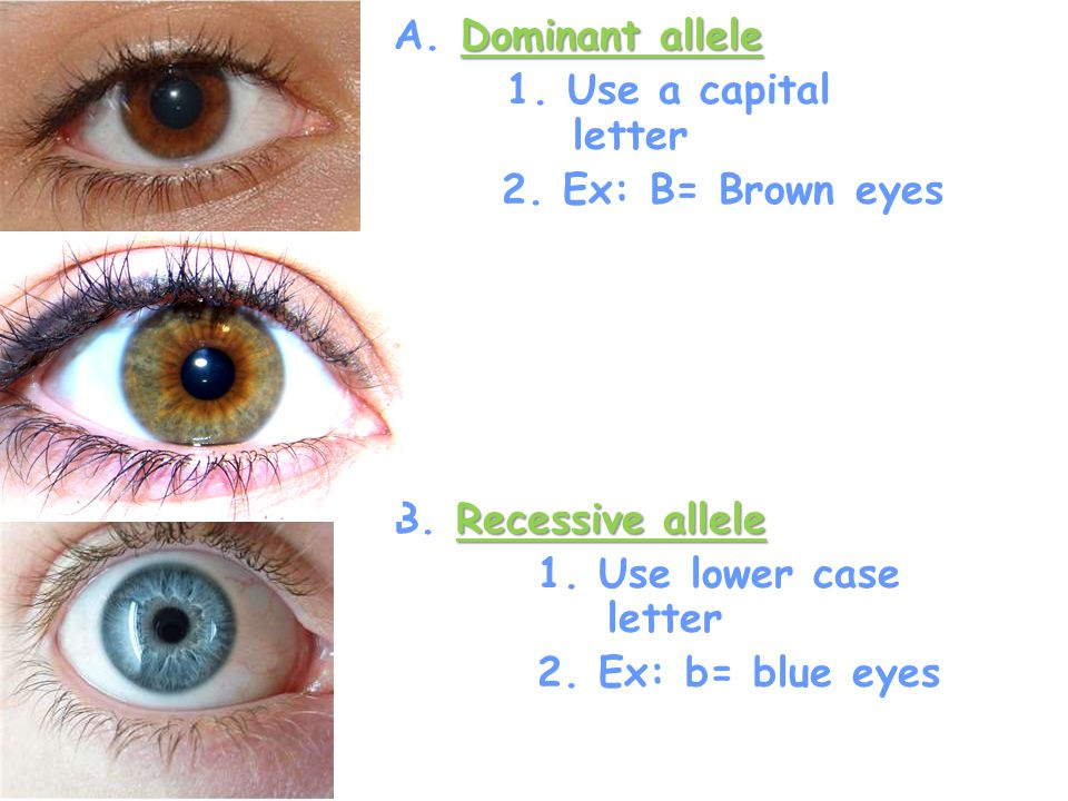 Dominant allele A. Dominant allele 1. Use a capital letter 2. Ex: B= Brown eyes Recessive allele B. Recessive allele 1. Use lower case letter 2. Ex: b
