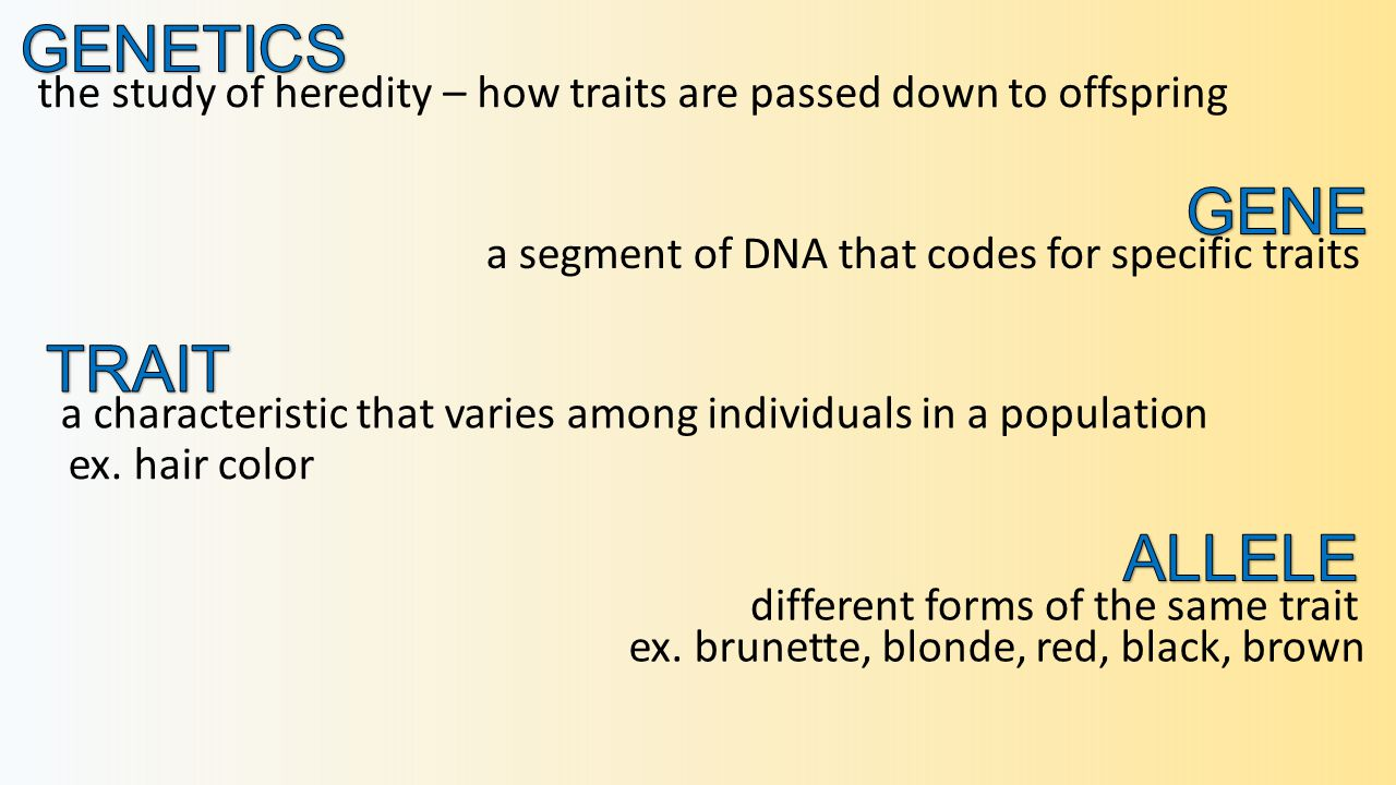 the study of heredity – how traits are passed down to offspring a characteristic that varies among individuals in a population a segment of DNA that codes for specific traits different forms of the same trait ex.