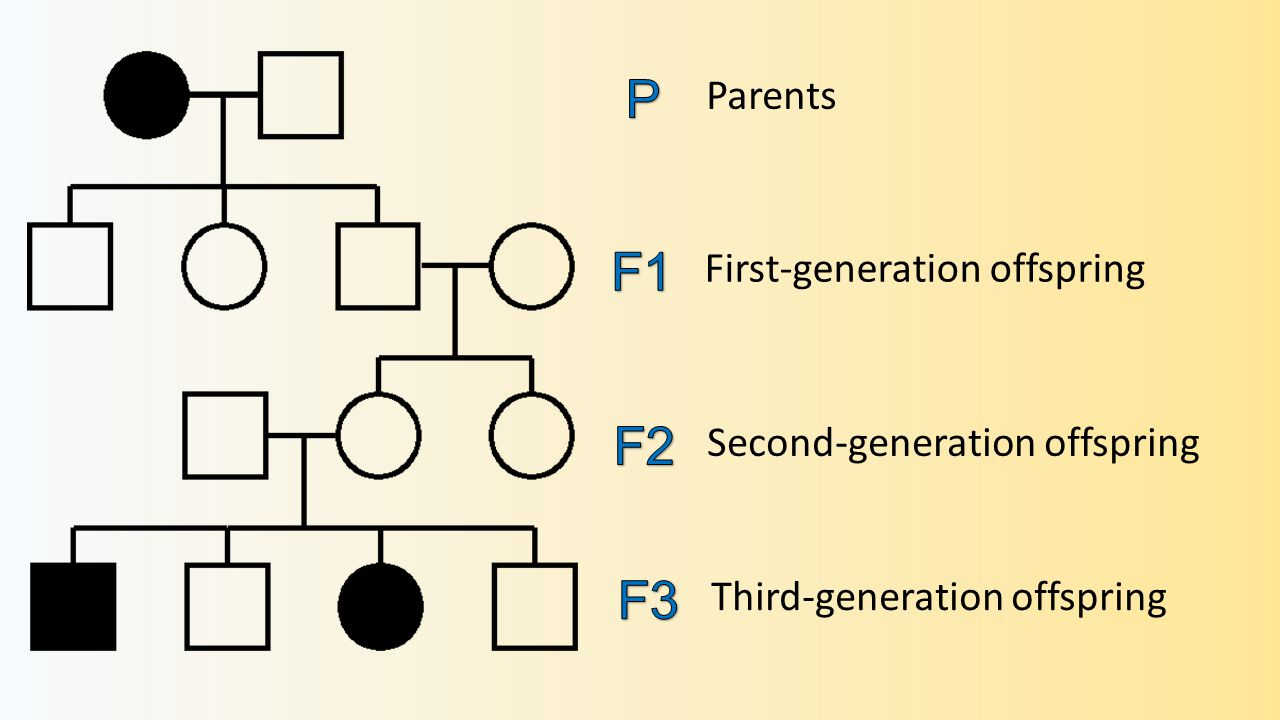 Parents First-generation offspring Second-generation offspring Third-generation offspring