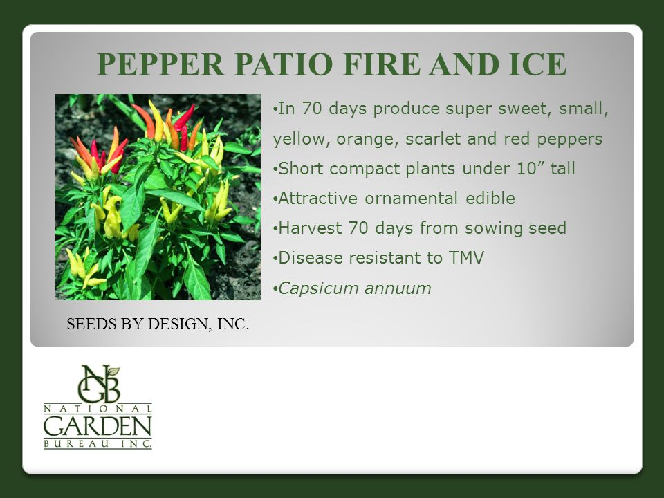 PEPPER PATIO FIRE AND ICE In 70 days produce super sweet, small, yellow, orange, scarlet and red peppers Short compact plants under 10 tall Attractive ornamental edible Harvest 70 days from sowing seed Disease resistant to TMV Capsicum annuum SEEDS BY DESIGN, INC.