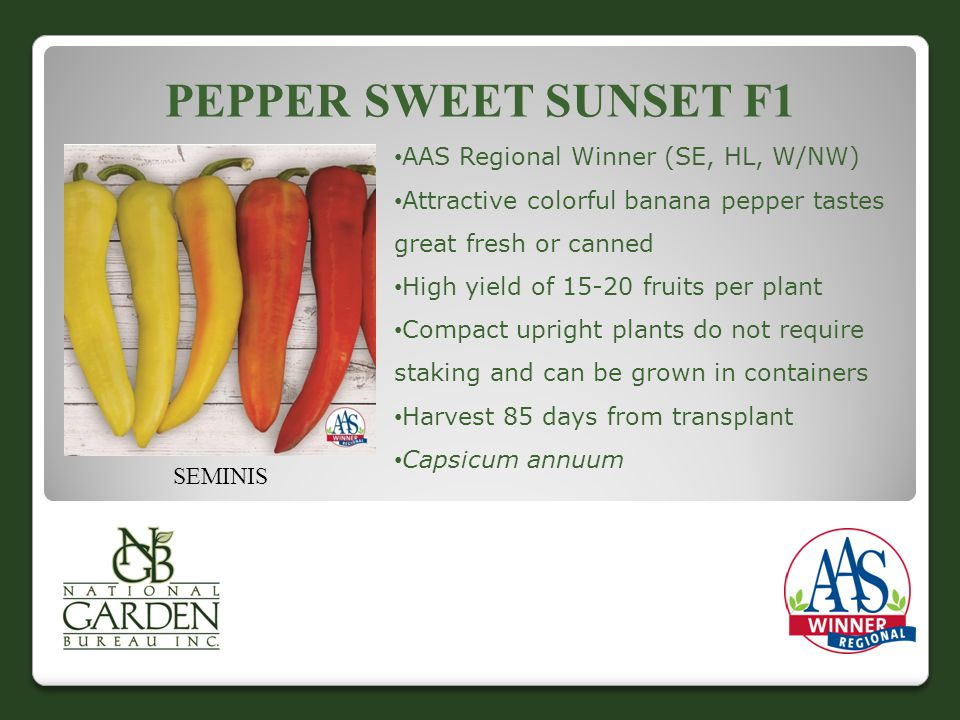 PEPPER SWEET SUNSET F1 AAS Regional Winner (SE, HL, W/NW) Attractive colorful banana pepper tastes great fresh or canned High yield of 15-20 fruits per plant Compact upright plants do not require staking and can be grown in containers Harvest 85 days from transplant Capsicum annuum SEMINIS