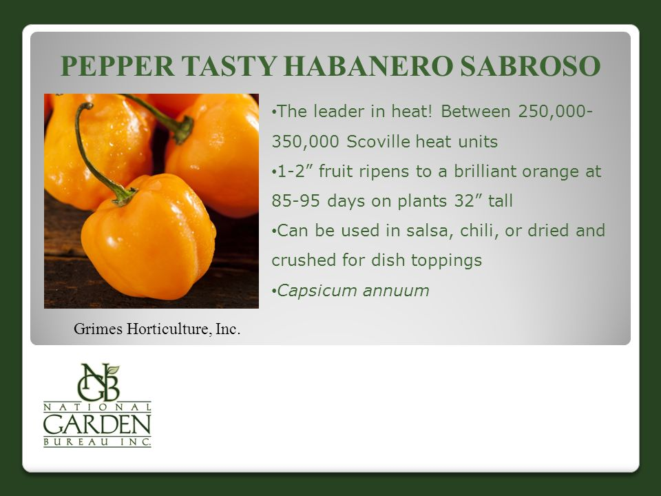 PEPPER TASTY HABANERO SABROSO The leader in heat.