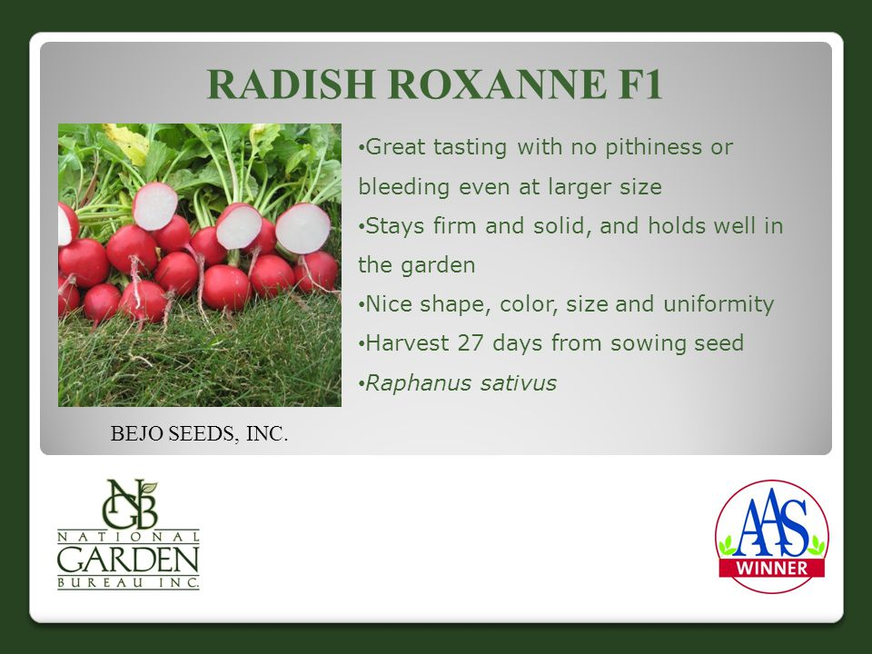RADISH ROXANNE F1 Great tasting with no pithiness or bleeding even at larger size Stays firm and solid, and holds well in the garden Nice shape, color, size and uniformity Harvest 27 days from sowing seed Raphanus sativus BEJO SEEDS, INC.