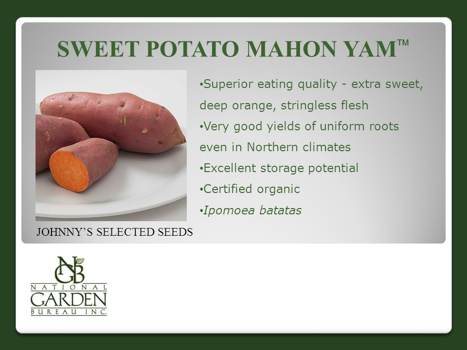 SWEET POTATO MAHON YAM  Superior eating quality - extra sweet, deep orange, stringless flesh Very good yields of uniform roots even in Northern climates Excellent storage potential Certified organic Ipomoea batatas JOHNNY'S SELECTED SEEDS