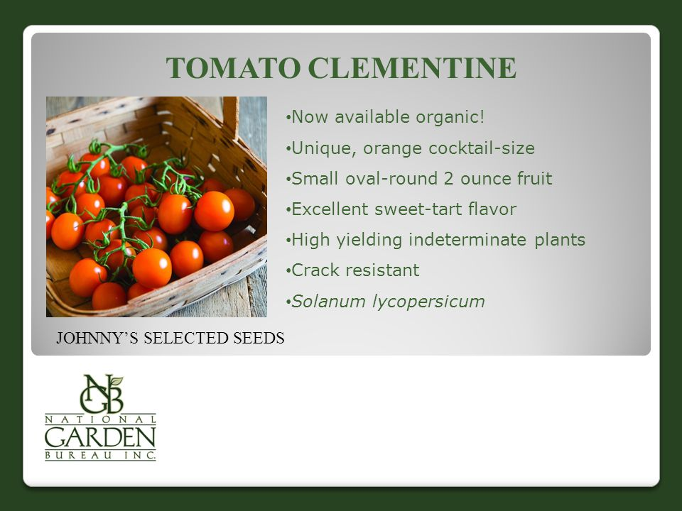 TOMATO CLEMENTINE Now available organic.