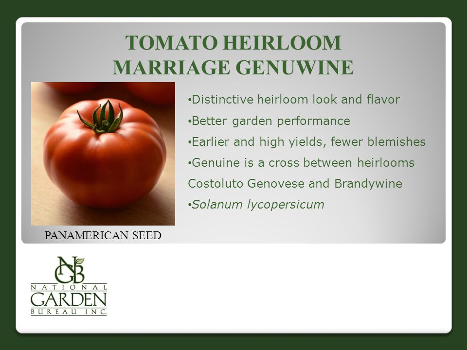 TOMATO HEIRLOOM MARRIAGE GENUWINE Distinctive heirloom look and flavor Better garden performance Earlier and high yields, fewer blemishes Genuine is a cross between heirlooms Costoluto Genovese and Brandywine Solanum lycopersicum PANAMERICAN SEED