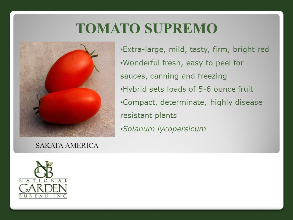 TOMATO SUPREMO Extra-large, mild, tasty, firm, bright red Wonderful fresh, easy to peel for sauces, canning and freezing Hybrid sets loads of 5-6 ounce fruit Compact, determinate, highly disease resistant plants Solanum lycopersicum SAKATA AMERICA