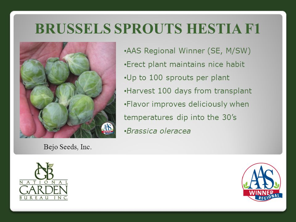 BRUSSELS SPROUTS HESTIA F1 Bejo Seeds, Inc.