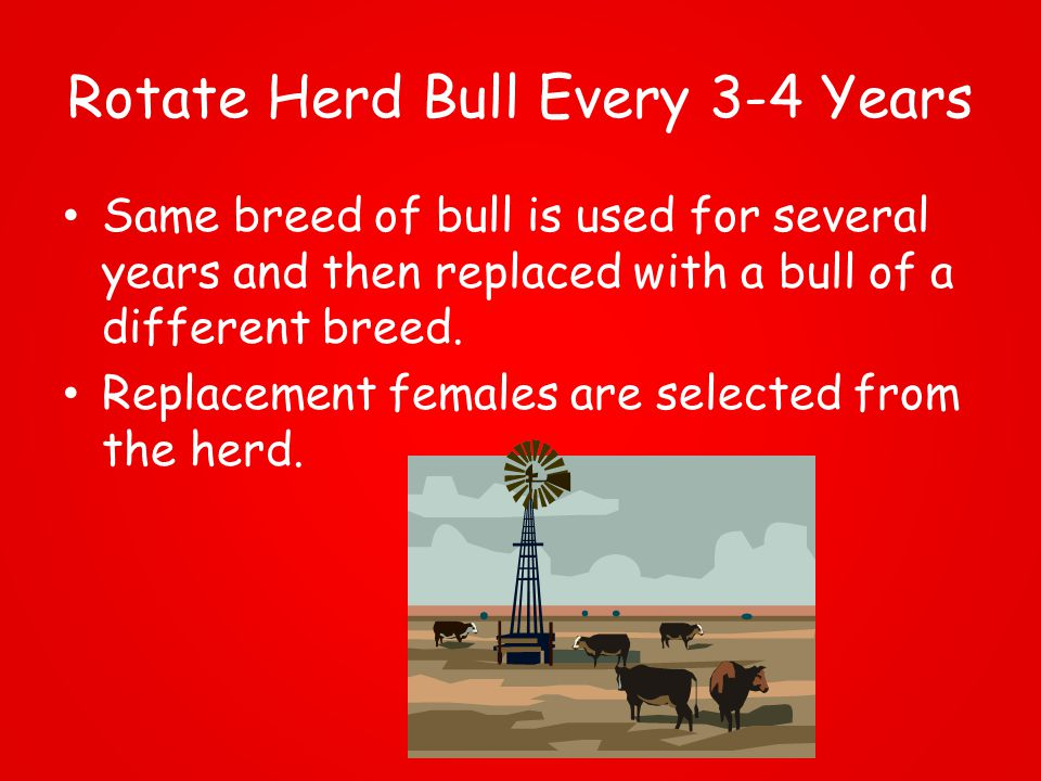 Rotate Herd Bull Every 3-4 Years Same breed of bull is used for several years and then replaced with a bull of a different breed.