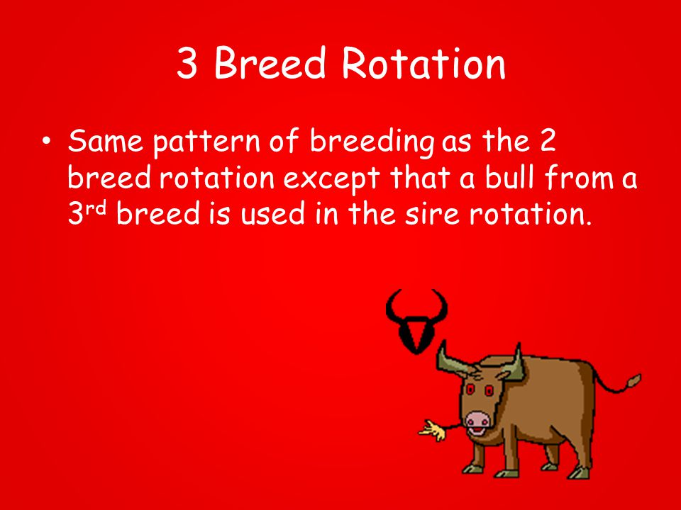 3 Breed Rotation Same pattern of breeding as the 2 breed rotation except that a bull from a 3 rd breed is used in the sire rotation.