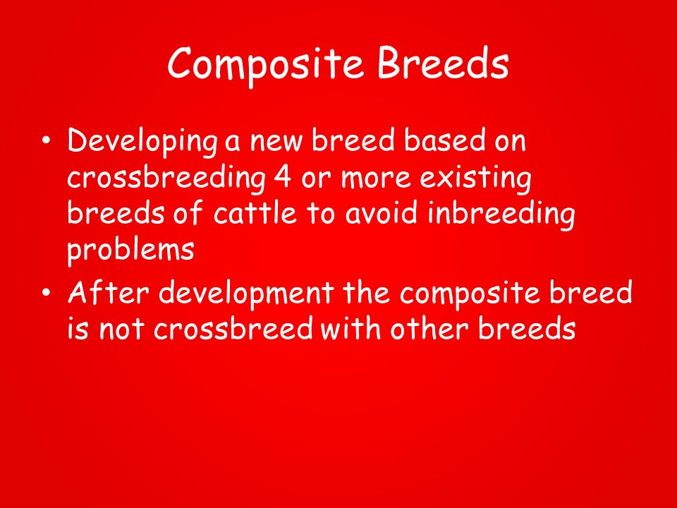 Composite Breeds Developing a new breed based on crossbreeding 4 or more existing breeds of cattle to avoid inbreeding problems After development the composite breed is not crossbreed with other breeds