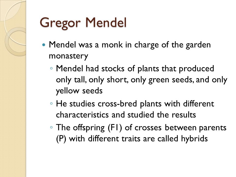 Gregor Mendel Mendel was a monk in charge of the garden monastery ◦ Mendel had stocks of plants that produced only tall, only short, only green seeds, and only yellow seeds ◦ He studies cross-bred plants with different characteristics and studied the results ◦ The offspring (F1) of crosses between parents (P) with different traits are called hybrids
