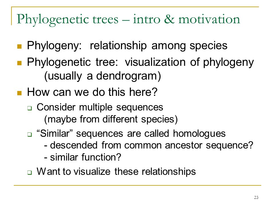 23 Phylogenetic trees – intro & motivation Phylogeny: relationship among species Phylogenetic tree: visualization of phylogeny (usually a dendrogram) How can we do this here.