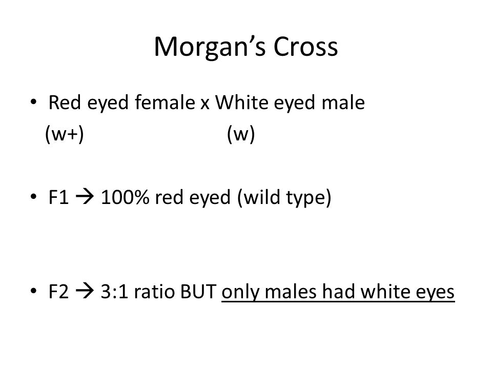 Morgan's Cross Red eyed female x White eyed male (w+)(w) F1  100% red eyed (wild type) F2  3:1 ratio BUT only males had white eyes
