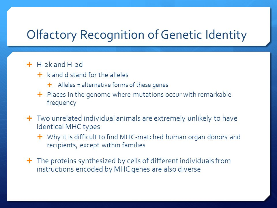 Olfactory Recognition of Genetic Identity  H-2k and H-2d  k and d stand for the alleles  Alleles = alternative forms of these genes  Places in the genome where mutations occur with remarkable frequency  Two unrelated individual animals are extremely unlikely to have identical MHC types  Why it is difficult to find MHC-matched human organ donors and recipients, except within families  The proteins synthesized by cells of different individuals from instructions encoded by MHC genes are also diverse