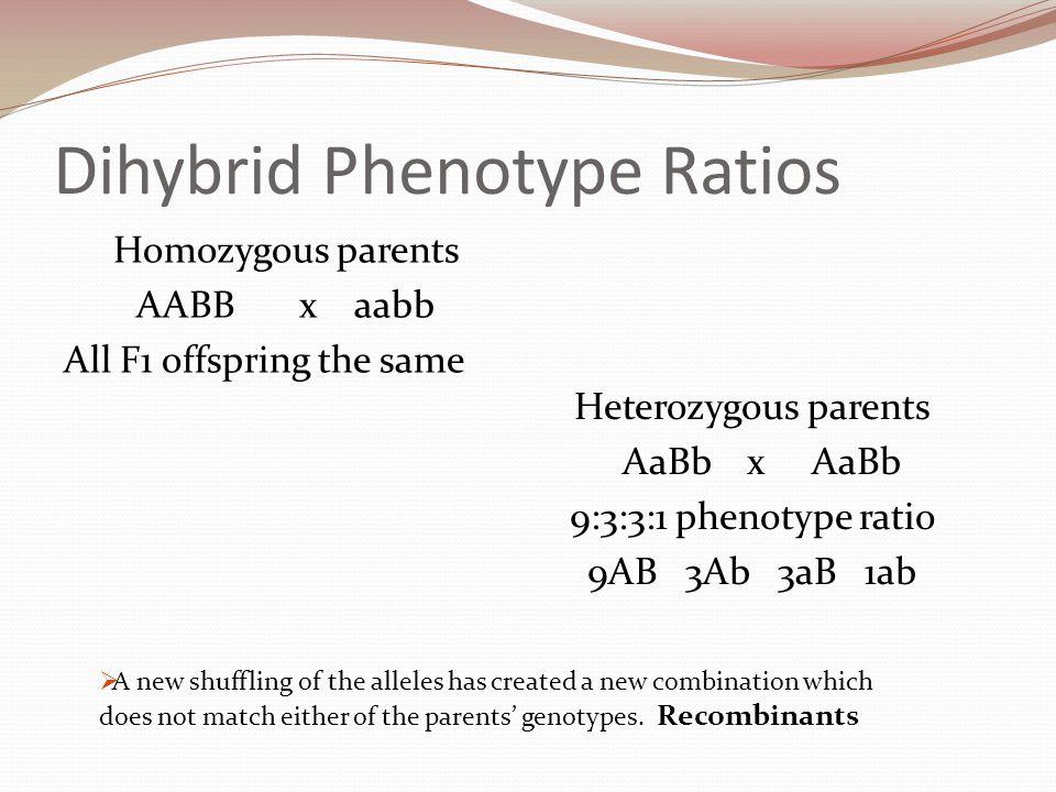 Dihybrid Phenotype Ratios Homozygous parents AABB x aabb All F1 offspring the same Heterozygous parents AaBb x AaBb 9:3:3:1 phenotype ratio 9AB 3Ab 3a