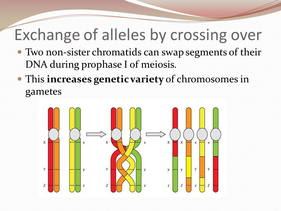 Human skin colour is controlled by multiple alleles (and the environment) It is known that at least three genes control skin color, let's call them genes A, B, and C.