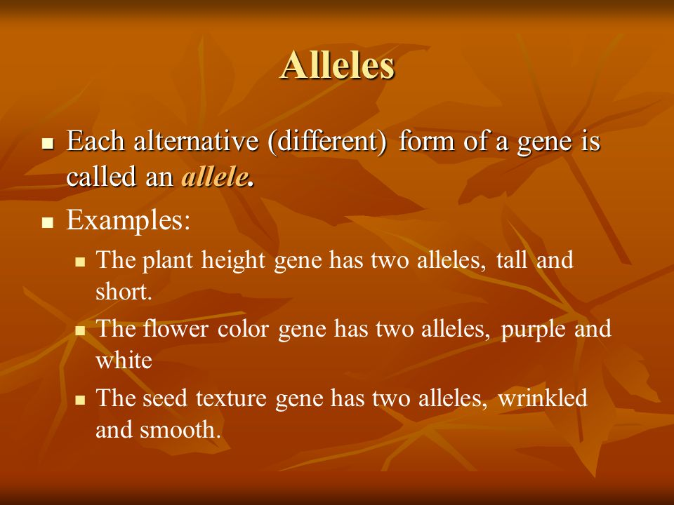Alleles Each alternative (different) form of a gene is called an allele. Each alternative (different) form of a gene is called an allele. Examples: Th