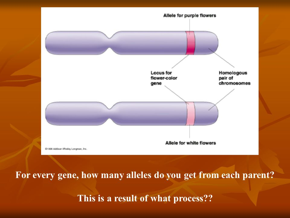 For every gene, how many alleles do you get from each parent? This is a result of what process??