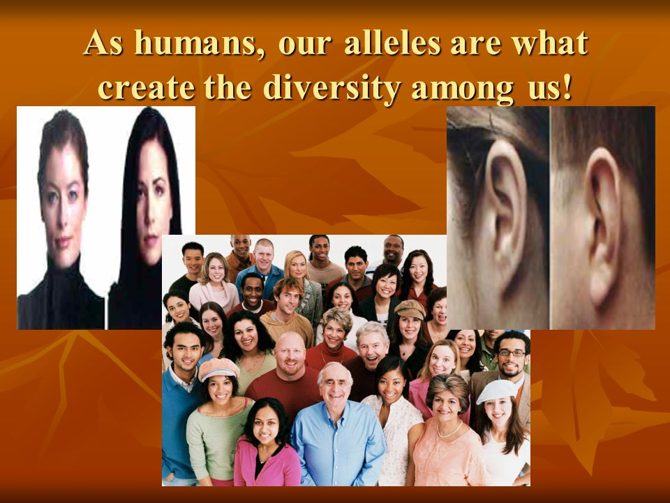 As humans, our alleles are what create the diversity among us!